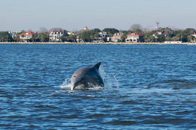 Schooner Pride Dolphin Tour