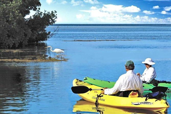 Backcountry Kayak and Paddleboard Tours