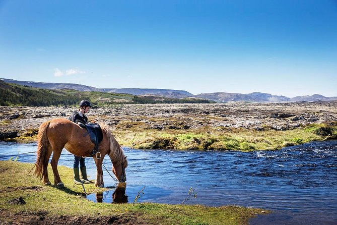 Icelandic Horseback Riding Tour from Reykjavik