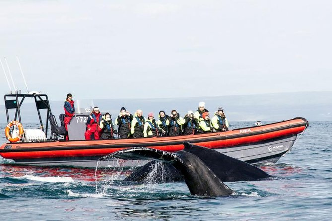 Whale Watching RIB Boat Tour from Husavik