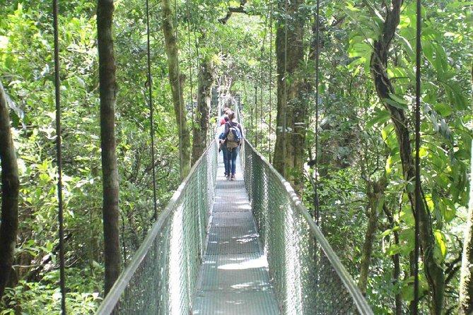monteverde-visite-ponts-suspendus