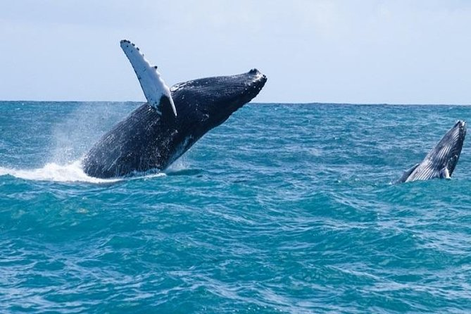 Whales Miches - The Ultimate Half Day Experience from Puna Cana