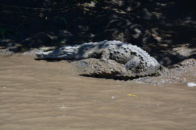 Palo Verde Wildlife Tour from Tamarindo photo 9