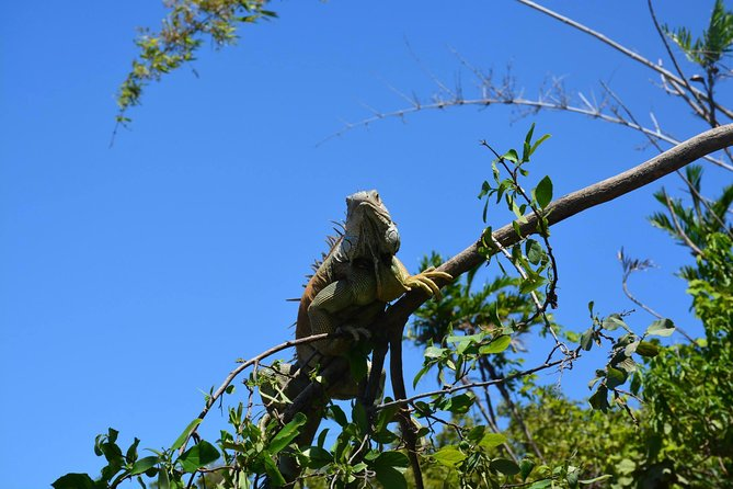 Palo Verde Wildlife Tour from Tamarindo photo 18