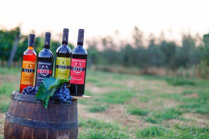 Wine & Oil Tasting Experience