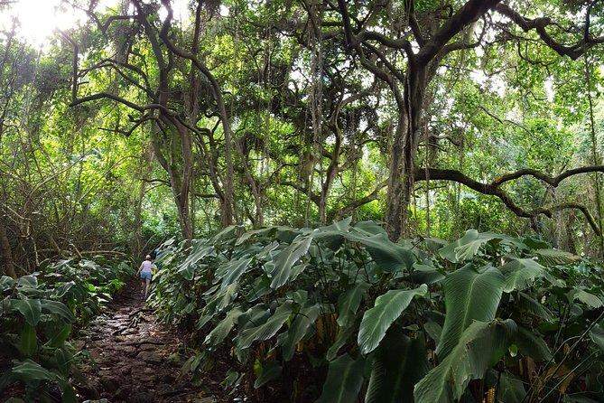 Ko'olau Waterfall Hike