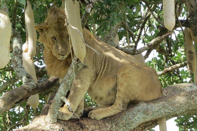 4 Days Kidepio Wildlife Safari Tour