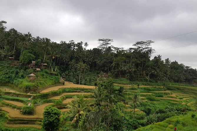 Ubud Tour All Inclusive Sightseeing with Lunch