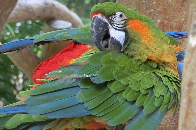 Airport IGU Round Trip & Iguassu Falls Brazilian side & Bird Park