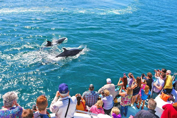 Mirissa Whales & Dolphin Watching Day Trip from Bentota - All Inclusive