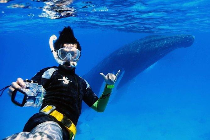 Humpback Whale Eco Tour - Private Charter, Grand Turk