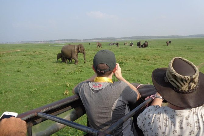Minneriya and kudulla national Park half day safari