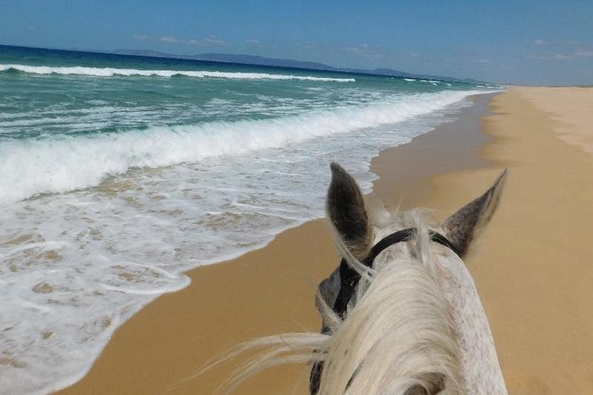 Horse Riding Tour on the Beach photo 4