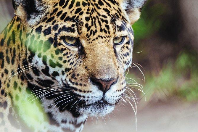 Garifuna Cultural Culinary Adventure & Jaguar Reserve Night Tour