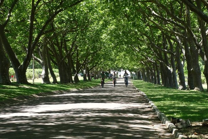 Scenic tree lined avenues