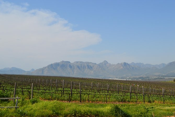 Stellenbosch Guided Winelands Cycle Tour photo 3
