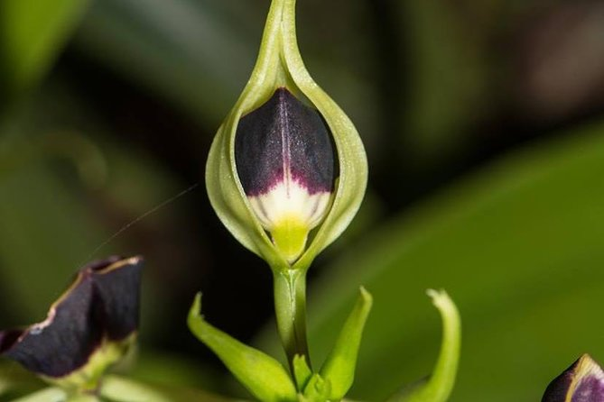 Guided Senses Botanical Garden Tour at Ian Anderson's Caves Branch Lodge