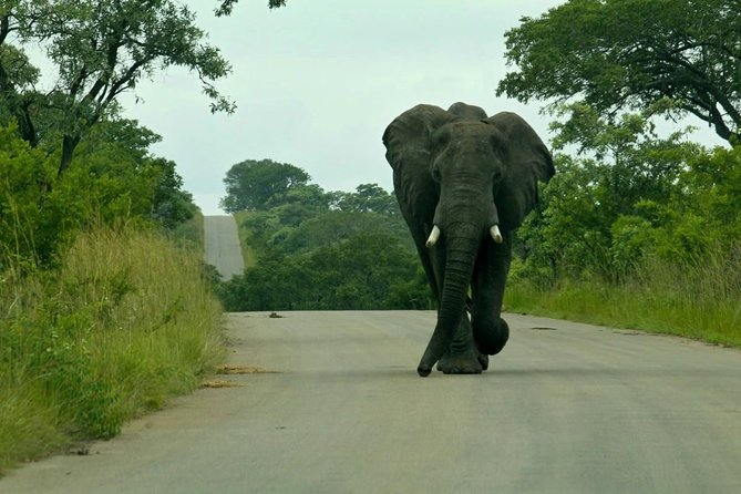 Kruger National Park 2 Days 1 Night Magical Safari from Johannesburg photo 9