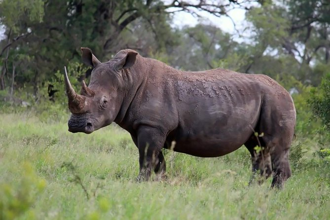 Kruger National Park 2 Days 1 Night Magical Safari from Johannesburg photo 6