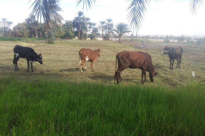 4 Days Egyptian Rural Live Explore