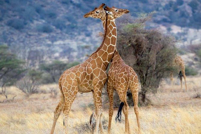 Taste of Tanzania Safari - 8 Days