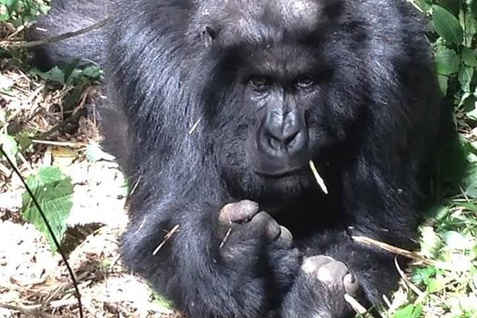 Budget - 5 Days Uganda Gorilla Road Safari