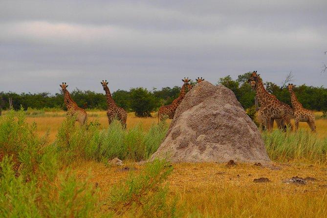 Zambia, Botswana Tour Package