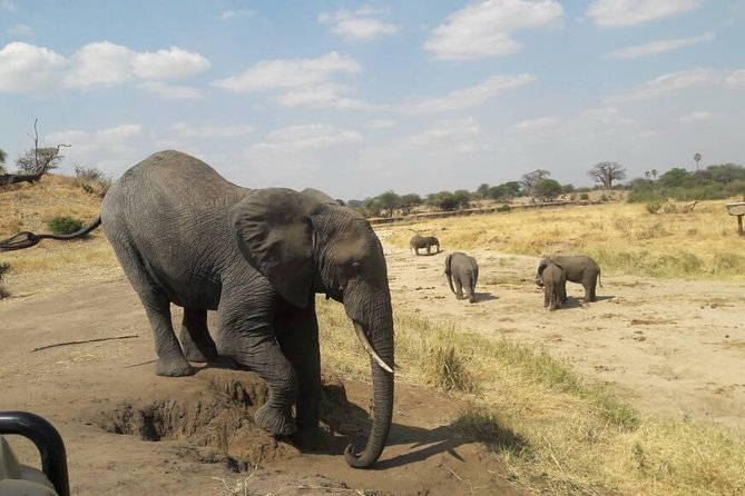 7 Day Tanzanian Adventure Safari