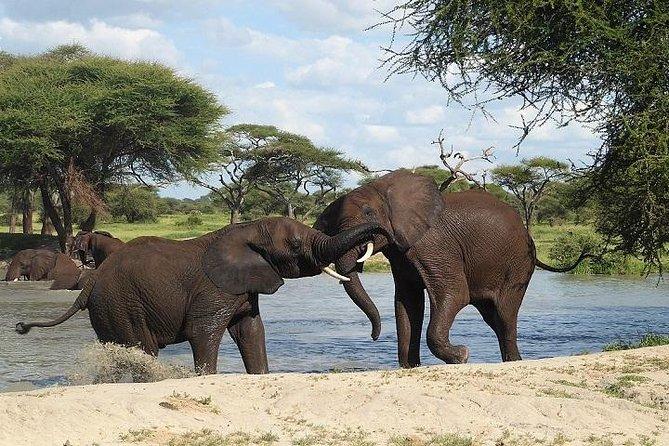 Private Guided Kilimanjaro Trek & Tanzania Safari