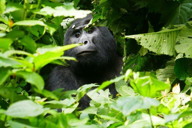 3 Day Gorilla and Lake Bunyonyi tour
