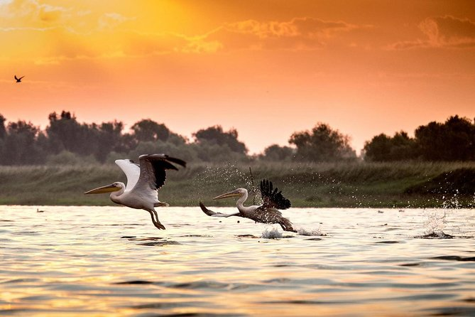 Private four days safari experience to the Danube Delta from Bucharest