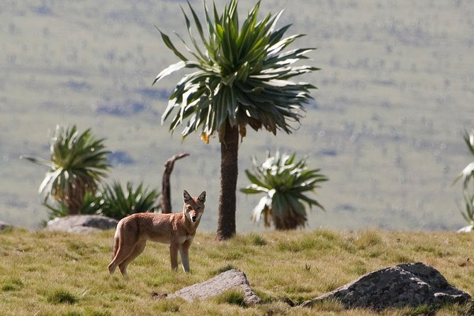 4 Days Trek in Bale Mountains National Park