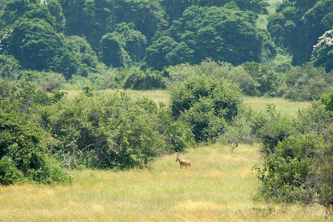 4 Days Murchison Falls Safaris