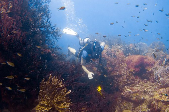 7-Night, 10-Dive Scuba Diving Experience in Carriacou photo 2