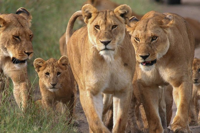 4-Day Small Group Maasai Mara and Lake Nakuru Safari from Nairobi