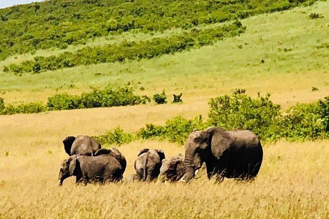 8-Day Small-Group Masai Mara, Manyara and Serengeti Safari from Nairobi