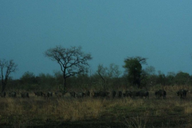 4-Day Wildlife Safari in Mole National Park from Accra