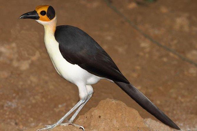 9 Days Sahel and Guinea Savanna Birding Holidays