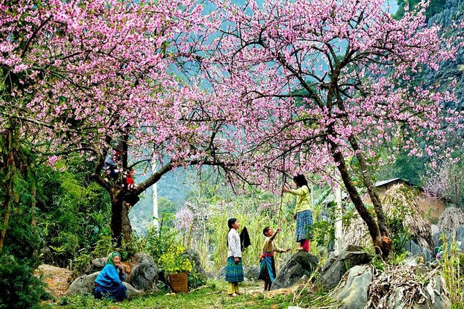 2 Day Moc Chau discover with flower blossom photo 2