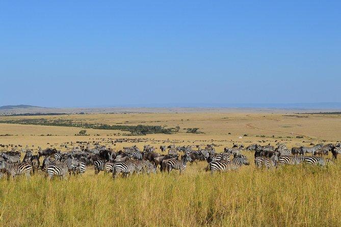 7 days itinerary touring Masai Mara, Nakuru, Amboseli, both Tsavo ending Mombasa