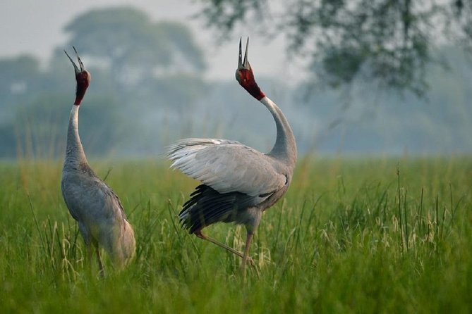Guided Tour To Bharatpur Bird Sanctuary With Transportation