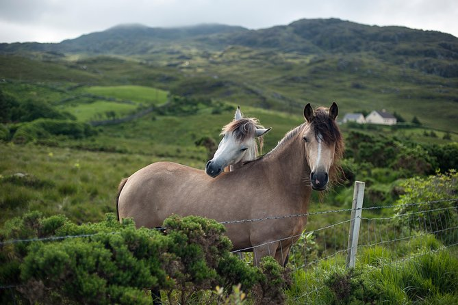2-Day Connemara and Galway Bay Rail Tour from Dublin