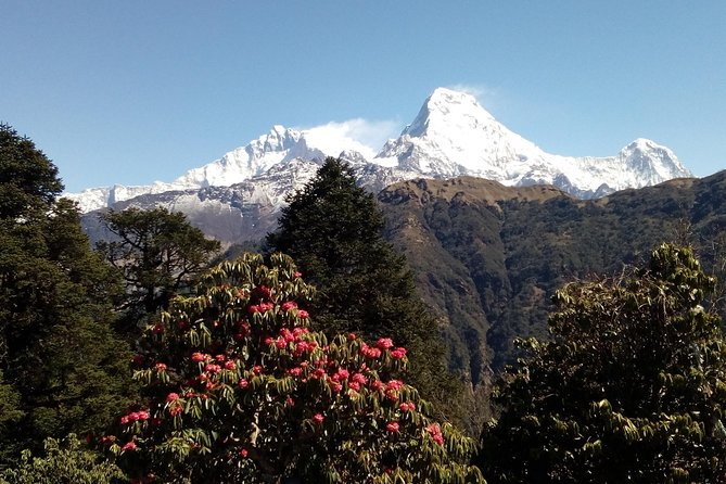 Annapurna Base Camp Very short Trek photo 2