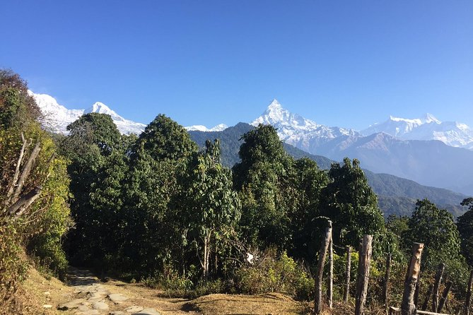 Ghandruk Trek with Dhampus for Families with Young Kids from Pokhara Nepal