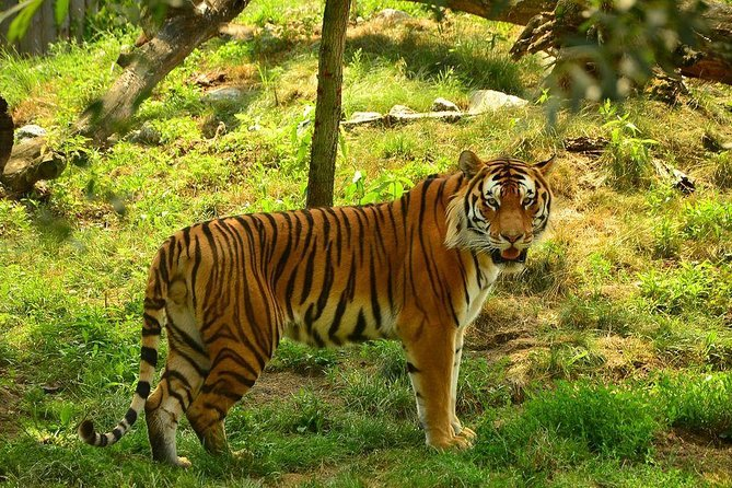 Panna Tiger Reserve Tour from Khajuraho