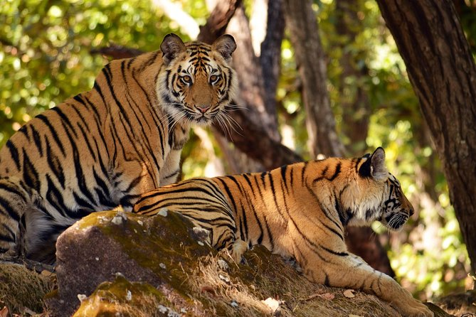 Taj Mahal and Ranthambore Wildlife from Delhi
