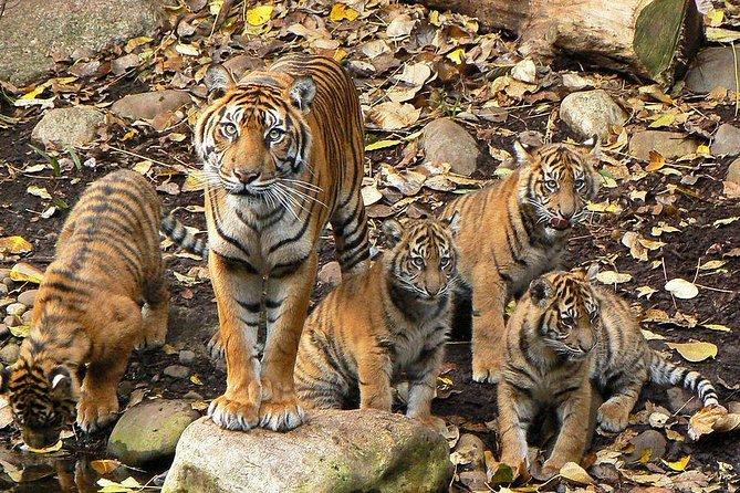 Excursão privada de vida selvagem em Ranthambore saindo de Delhi