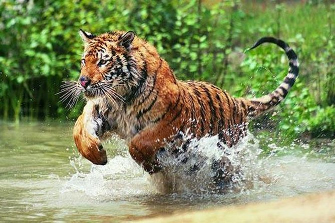 3-Day Ranthambore Wildlife Safari Tour from Delhi