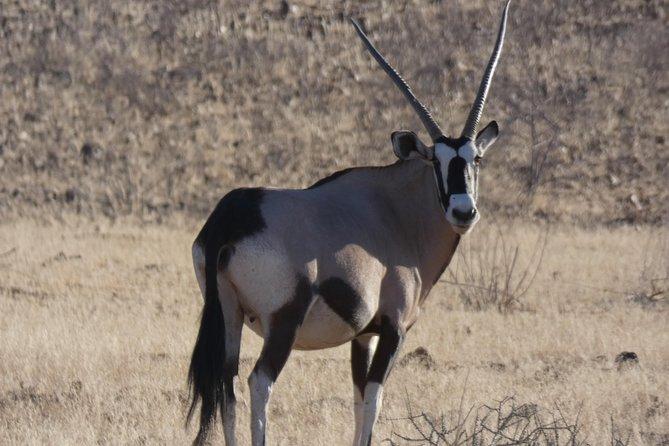 5 Day Etosha Safari Private Guided Tour Namibia