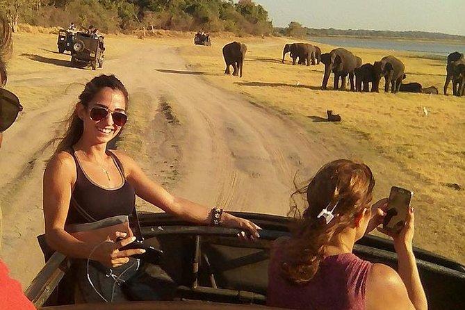 Safari at Udawalawa & Yala national parks from Colombo